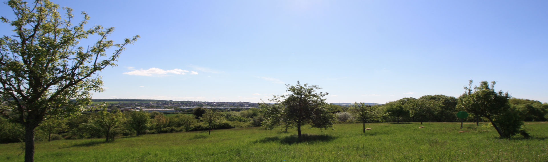 Naturschutzgebiet Pfingstweide